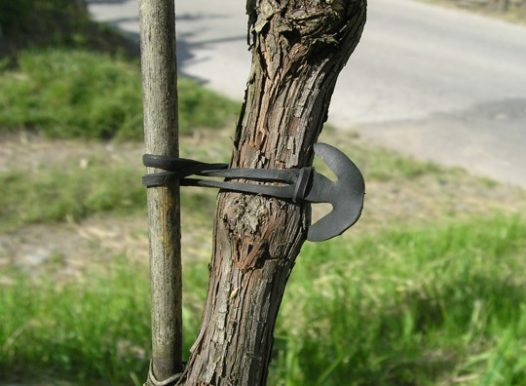 Vineyard EPDM Anchor band treefix a