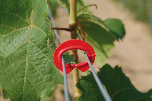 Vineyard Raffclip