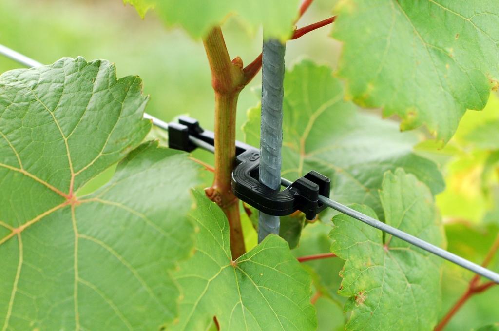 Vineyard galvanised stake clip plastic Wellstabfix